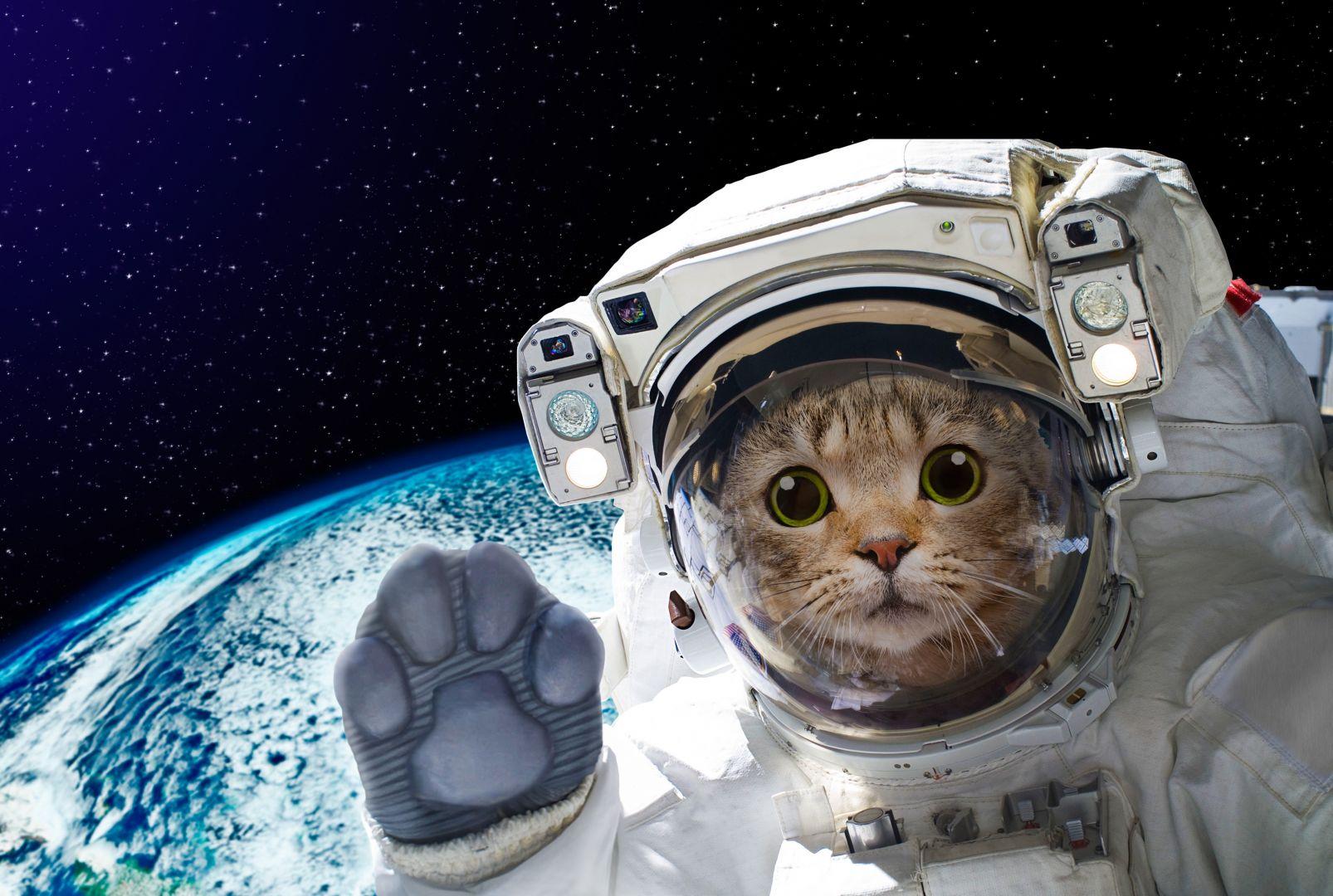 картинки животных в космосе встретить свою