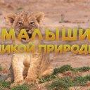 «Малыши дикой природы»