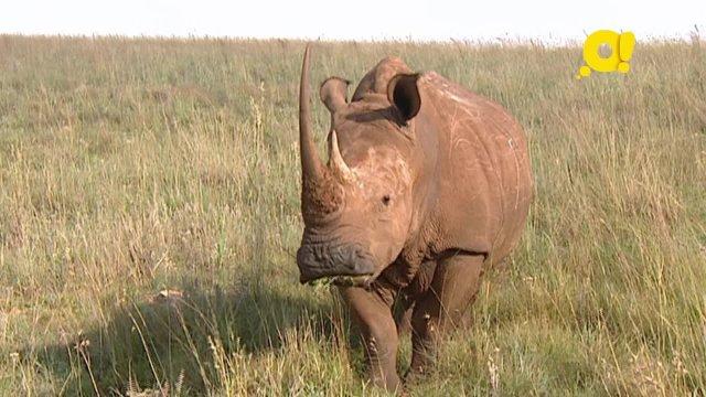 Малыши дикой природы. 8 серия. Носорог